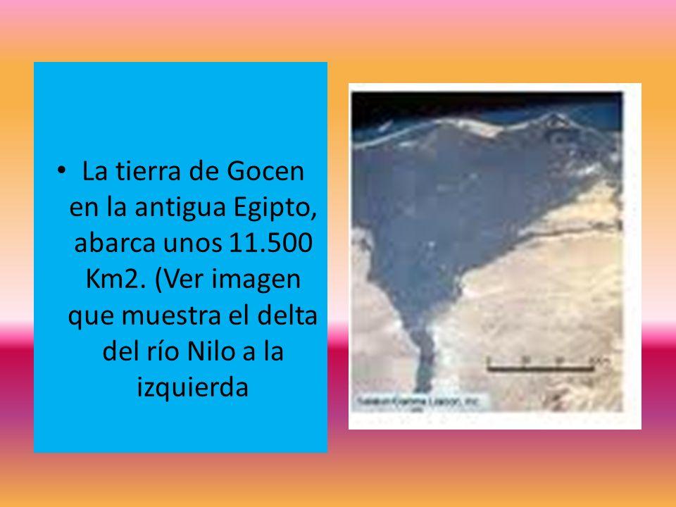 La tierra de Gocen en la antigua Egipto, abarca unos 11.500 Km2. (Ver imagen que muestra el delta del río Nilo a la izquierda