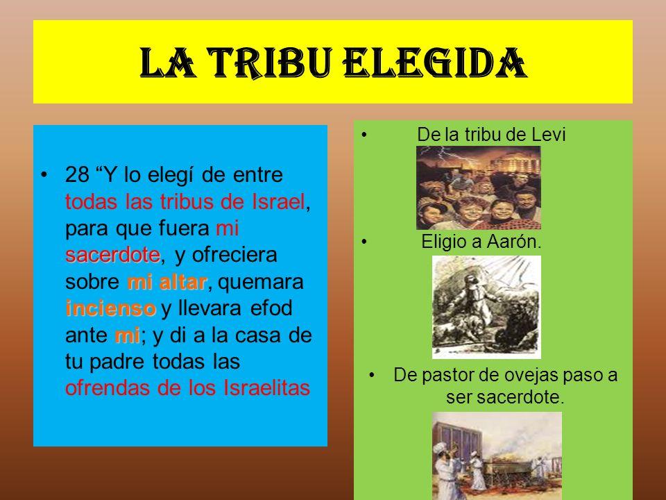 La tribu elegida sacerdote mi altar incienso mi28 Y lo elegí de entre todas las tribus de Israel, para que fuera mi sacerdote, y ofreciera sobre mi al
