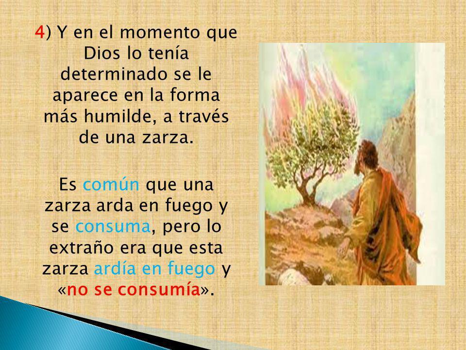 4) Y en el momento que Dios lo tenía determinado se le aparece en la forma más humilde, a través de una zarza. Es común que una zarza arda en fuego y