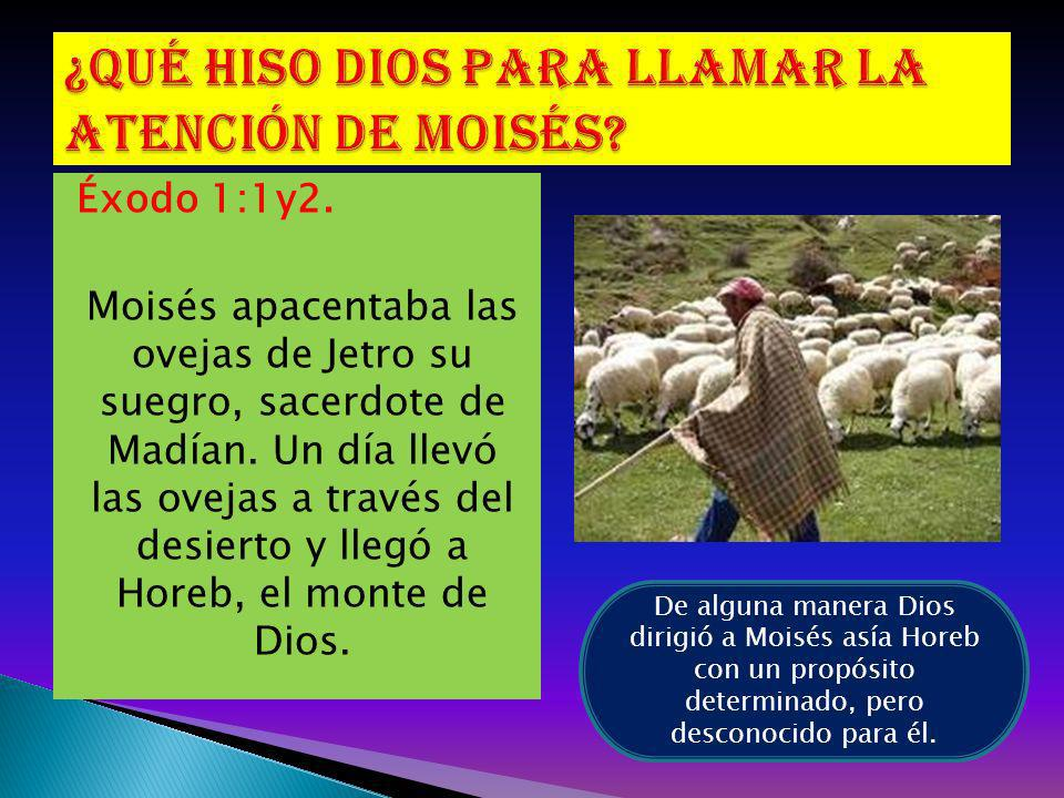 Éxodo 1:1y2. Moisés apacentaba las ovejas de Jetro su suegro, sacerdote de Madían. Un día llevó las ovejas a través del desierto y llegó a Horeb, el m