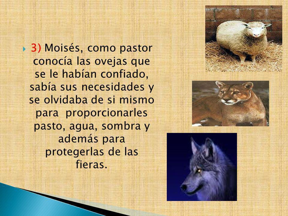 3) Moisés, como pastor conocía las ovejas que se le habían confiado, sabía sus necesidades y se olvidaba de si mismo para proporcionarles pasto, agua,