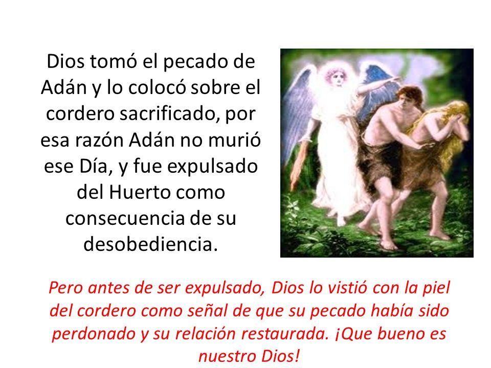 Dios tomó el pecado de Adán y lo colocó sobre el cordero sacrificado, por esa razón Adán no murió ese Día, y fue expulsado del Huerto como consecuenci
