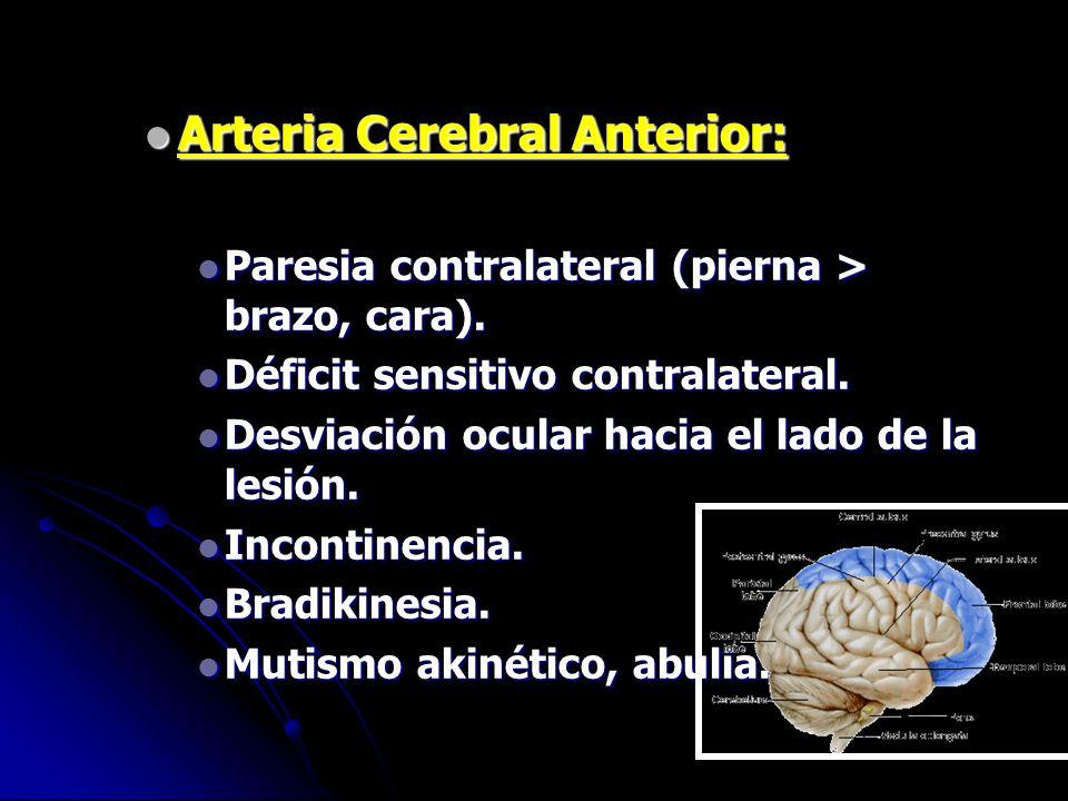 Arteria Cerebral Anterior: Arteria Cerebral Anterior: Paresia contralateral (pierna > brazo, cara). Paresia contralateral (pierna > brazo, cara). Défi