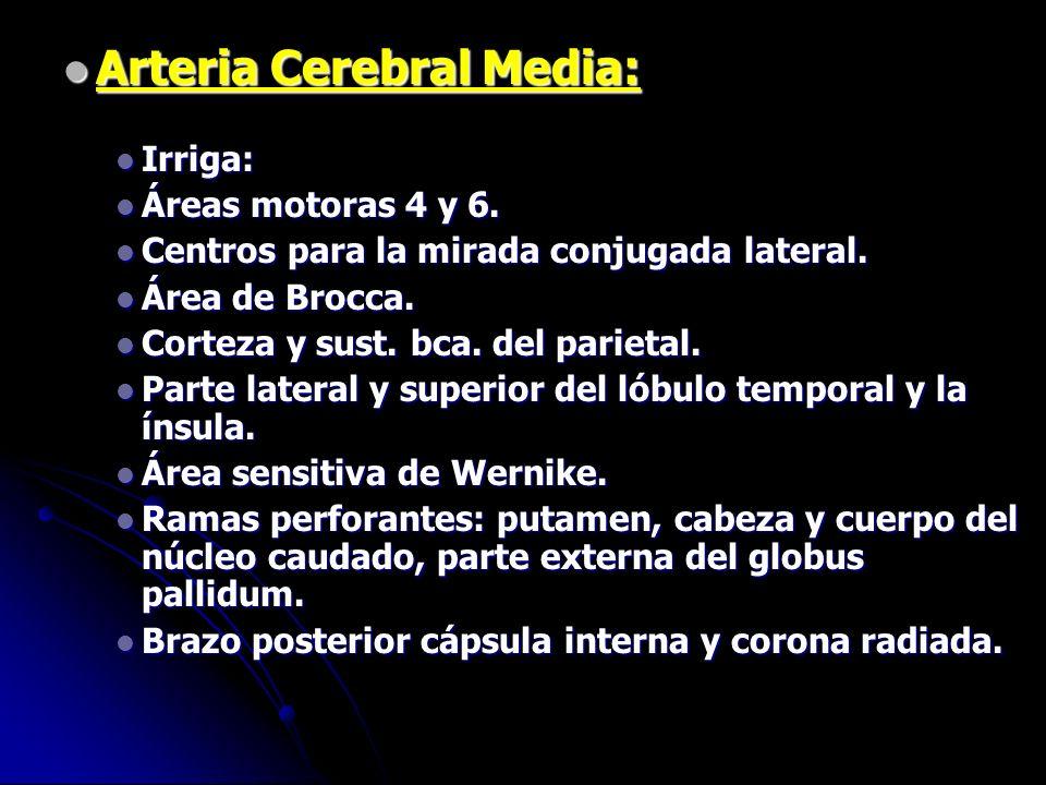 Arteria Cerebral Media: Arteria Cerebral Media: Irriga: Irriga: Áreas motoras 4 y 6. Áreas motoras 4 y 6. Centros para la mirada conjugada lateral. Ce