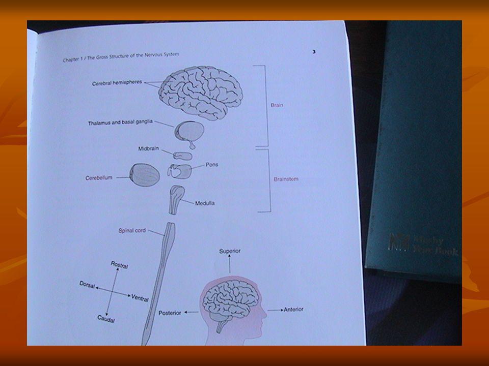 Concepto (Neurologia) Capacidad del SNC para que el individuo tenga conocimiento de si mismo y de lo que lo rodea.