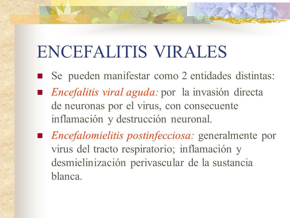 ENCEFALITIS VIRALES Se pueden manifestar como 2 entidades distintas: Encefalitis viral aguda: por la invasión directa de neuronas por el virus, con co