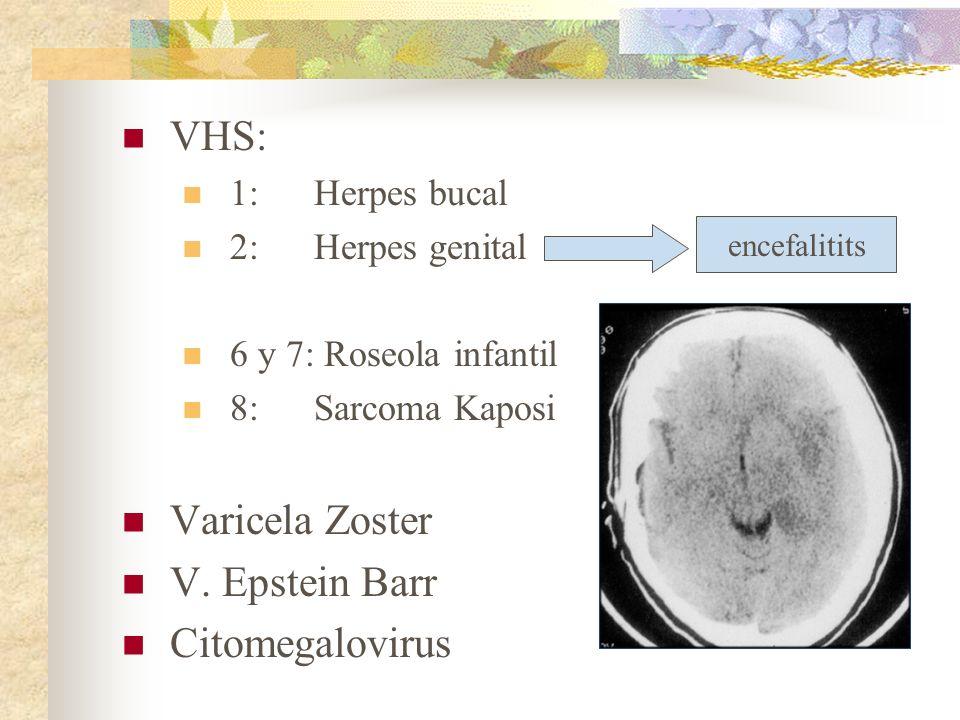 VHS: 1:Herpes bucal 2: Herpes genital 6 y 7: Roseola infantil 8: Sarcoma Kaposi Varicela Zoster V. Epstein Barr Citomegalovirus encefalitits