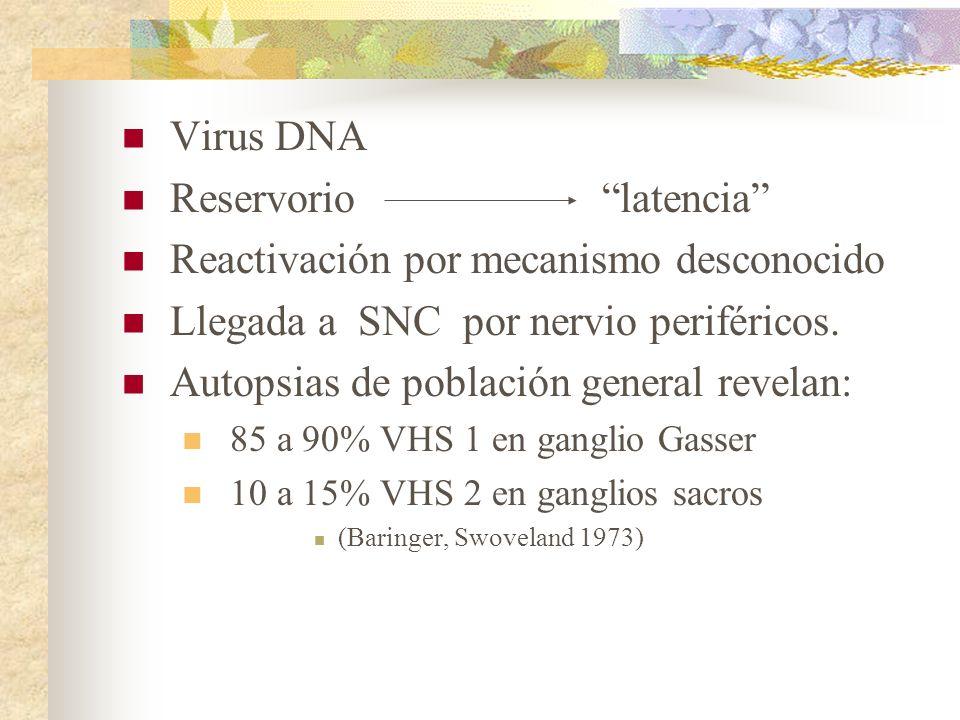 Virus DNA Reservoriolatencia Reactivación por mecanismo desconocido Llegada a SNC por nervio periféricos. Autopsias de población general revelan: 85 a
