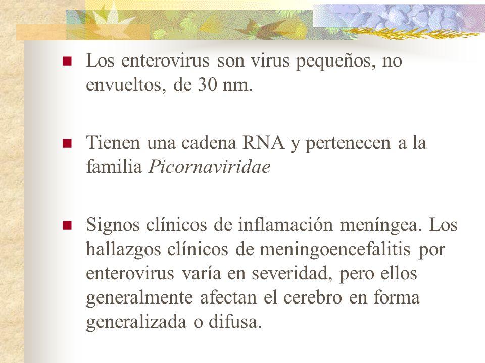 Los enterovirus son virus pequeños, no envueltos, de 30 nm. Tienen una cadena RNA y pertenecen a la familia Picornaviridae Signos clínicos de inflamac