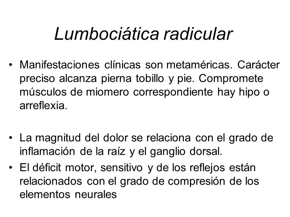 Manifestaciones clínicas son metaméricas. Carácter preciso alcanza pierna tobillo y pie. Compromete músculos de miomero correspondiente hay hipo o arr