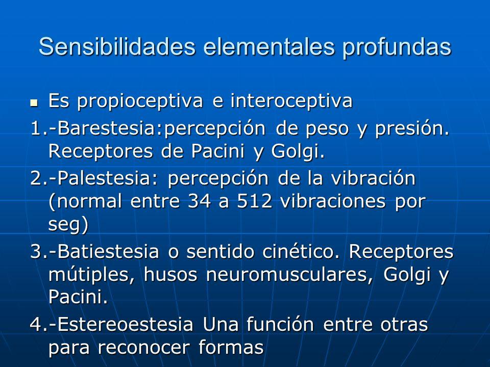 Sensibilidades elementales profundas Es propioceptiva e interoceptiva Es propioceptiva e interoceptiva 1.-Barestesia:percepción de peso y presión. Rec