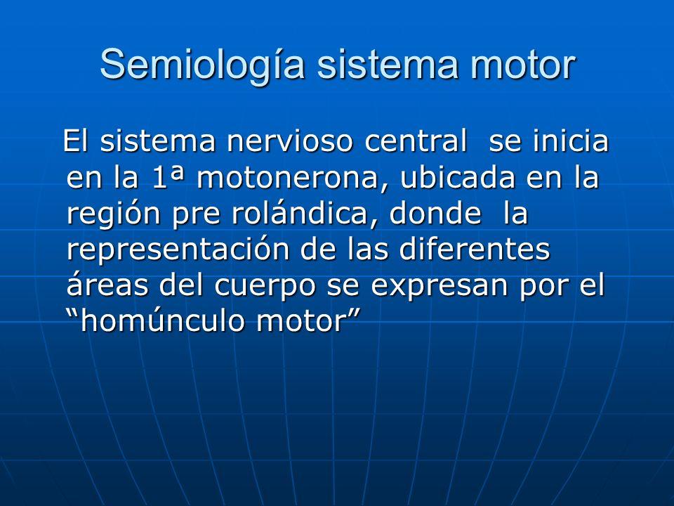 Semiología sistema motor El sistema nervioso central se inicia en la 1ª motonerona, ubicada en la región pre rolándica, donde la representación de las