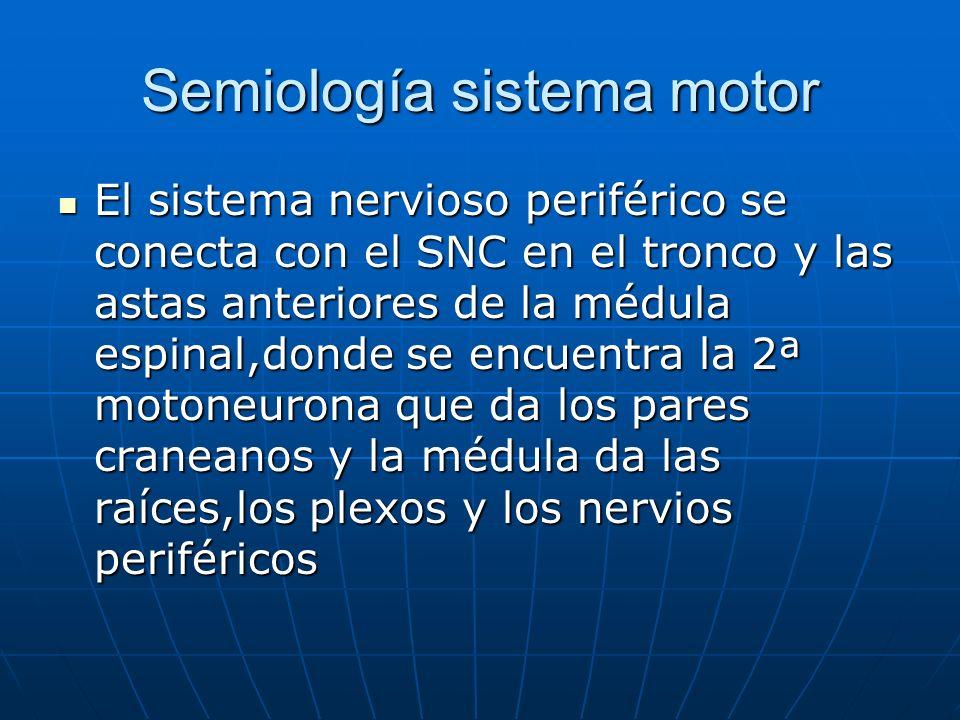 Semiología sistema motor El sistema nervioso periférico se conecta con el SNC en el tronco y las astas anteriores de la médula espinal,donde se encuen