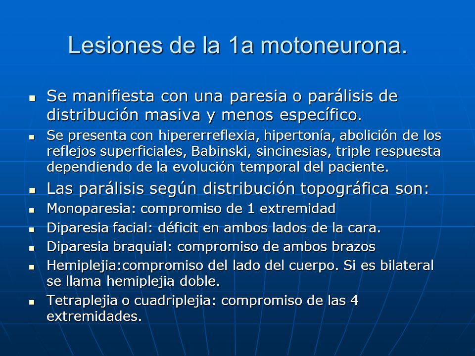 Lesiones de la 1a motoneurona. Se manifiesta con una paresia o parálisis de distribución masiva y menos específico. Se manifiesta con una paresia o pa