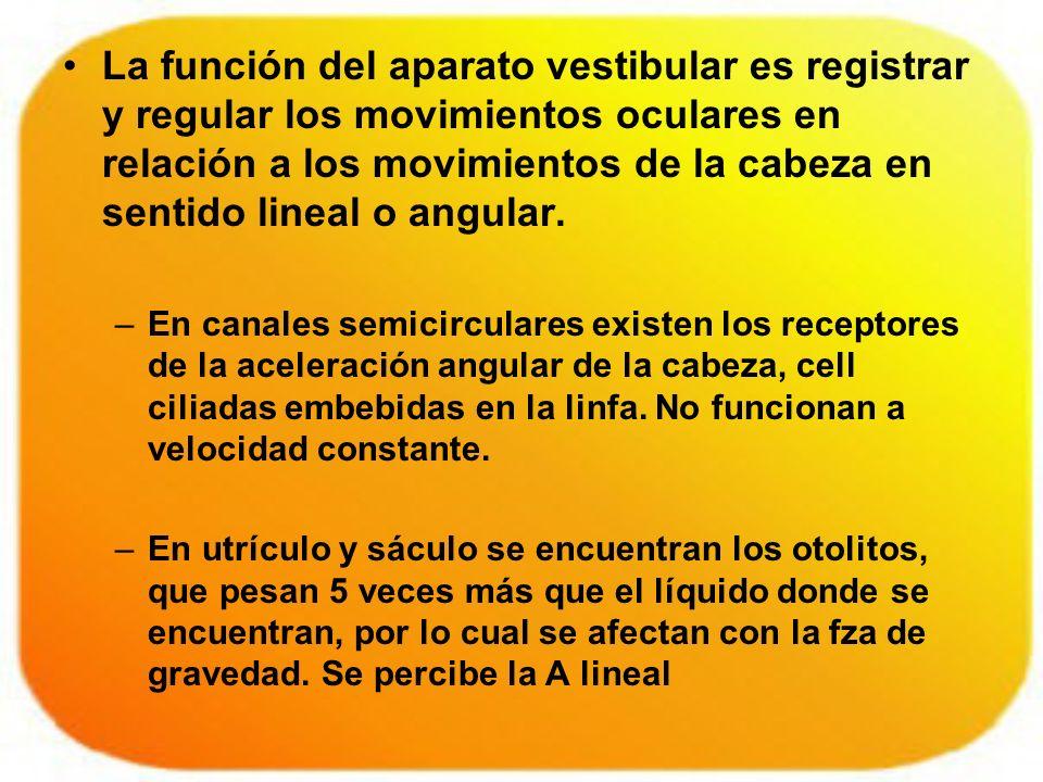 La función del aparato vestibular es registrar y regular los movimientos oculares en relación a los movimientos de la cabeza en sentido lineal o angul