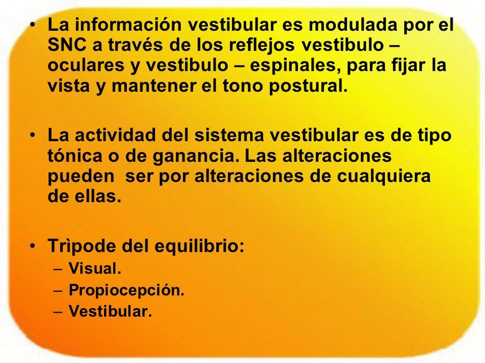 La información vestibular es modulada por el SNC a través de los reflejos vestibulo – oculares y vestibulo – espinales, para fijar la vista y mantener