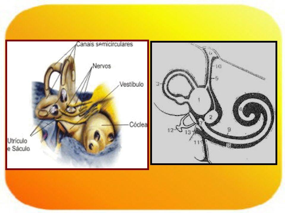 Sd vestibular periférico: –Lesión desde receptor hasta la entrada del nervio a tronco.