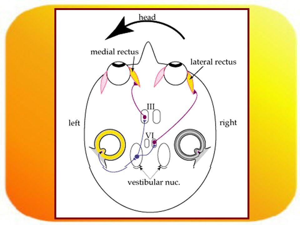 Signos.Nistagmus: –Mov ocular conjugado, rítmico, involuntario, con una fase lenta y rápida.