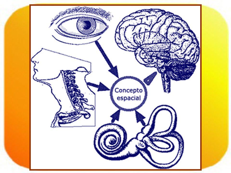 Signos.Nistagmus: –Uni o multidireccional. –Vertical.