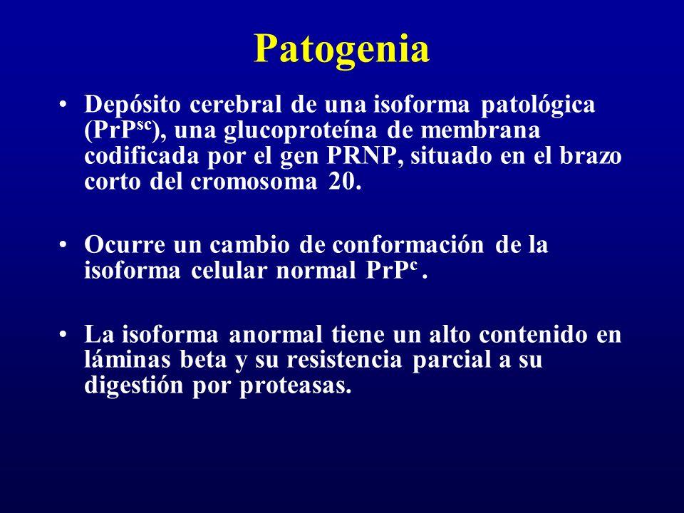Patogenia Depósito cerebral de una isoforma patológica (PrP sc ), una glucoproteína de membrana codificada por el gen PRNP, situado en el brazo corto