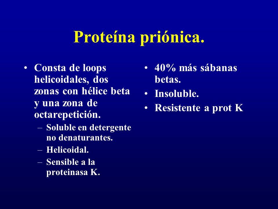 Proteína priónica. Consta de loops helicoidales, dos zonas con hélice beta y una zona de octarepetición. –Soluble en detergente no denaturantes. –Heli