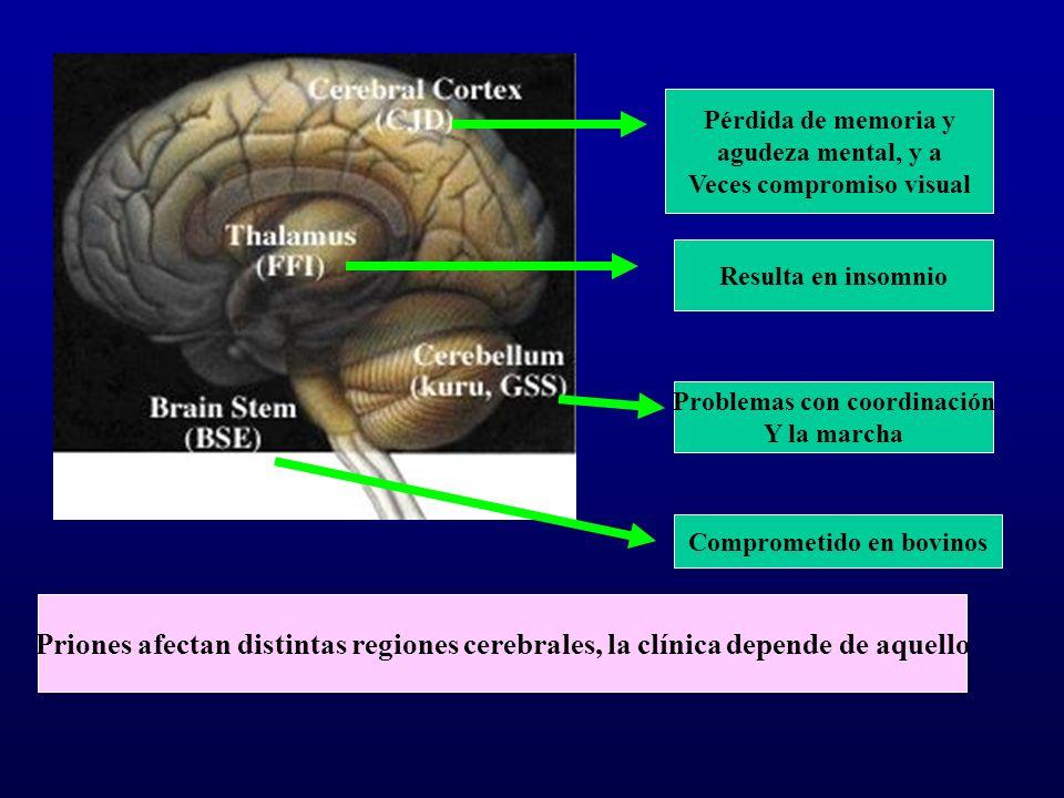 Pérdida de memoria y agudeza mental, y a Veces compromiso visual Resulta en insomnio Problemas con coordinación Y la marcha Comprometido en bovinos Pr
