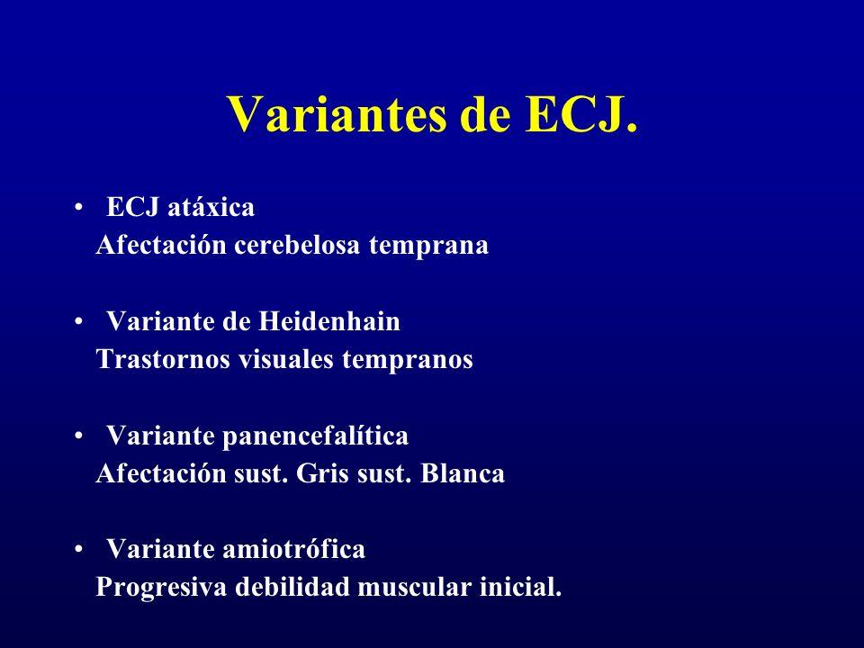 Variantes de ECJ. ECJ atáxica Afectación cerebelosa temprana Variante de Heidenhain Trastornos visuales tempranos Variante panencefalítica Afectación