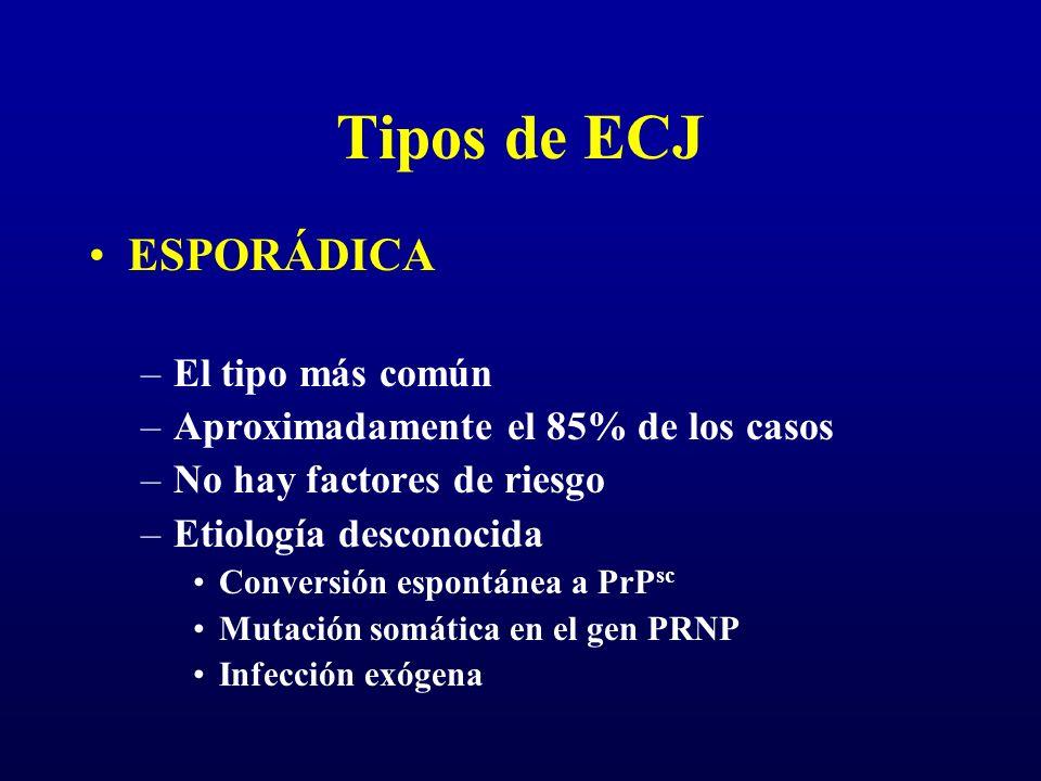 Tipos de ECJ ESPORÁDICA –El tipo más común –Aproximadamente el 85% de los casos –No hay factores de riesgo –Etiología desconocida Conversión espontáne