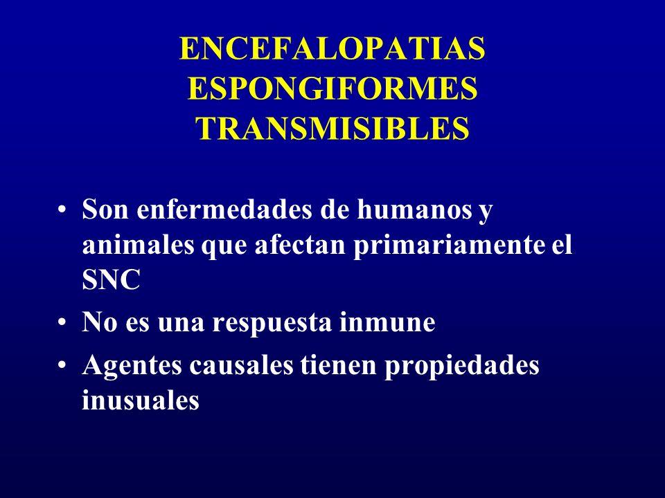 ENCEFALOPATIAS ESPONGIFORMES TRANSMISIBLES Son enfermedades de humanos y animales que afectan primariamente el SNC No es una respuesta inmune Agentes