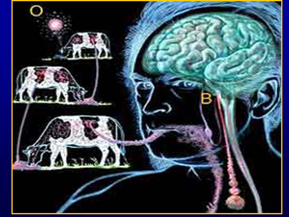 DETERIORO MENTAL: –Demencia 66% Memoria, desorientación espacial, juicio y razonamiento –Alteraciones de conducta 40% Agitación, depresión –Alteraciones de funciones superiores 36% Anomia, acalculia, agrafia