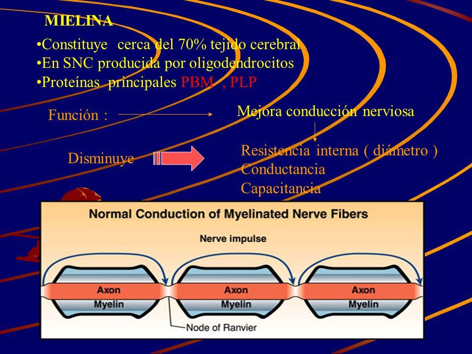 MIELINA Constituye cerca del 70% tejido cerebral En SNC producida por oligodendrocitos Proteínas principales PBM, PLP Función : Mejora conducción nerv