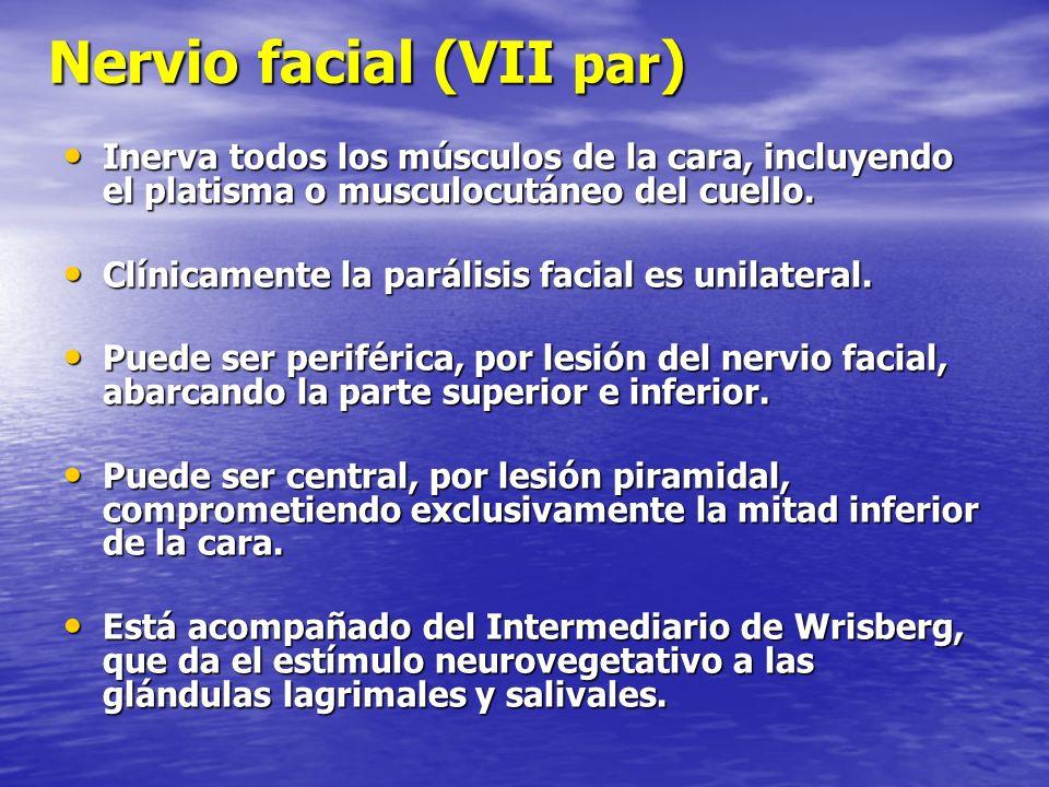 Nervio facial (VII par ) Inerva todos los músculos de la cara, incluyendo el platisma o musculocutáneo del cuello. Inerva todos los músculos de la car
