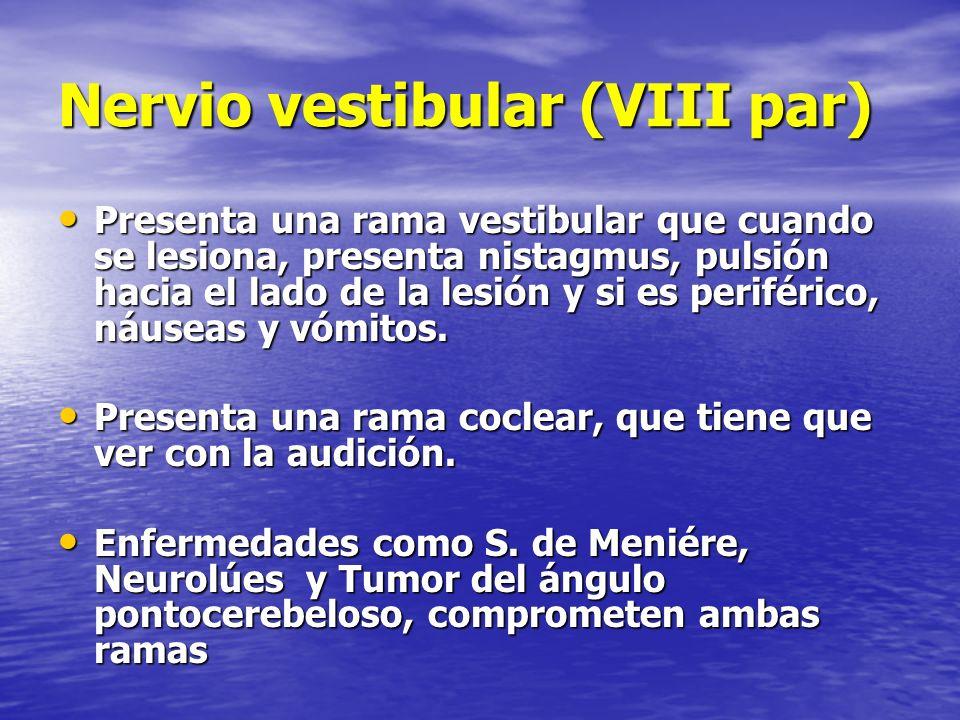 Nervio vestibular (VIII par) Presenta una rama vestibular que cuando se lesiona, presenta nistagmus, pulsión hacia el lado de la lesión y si es perifé