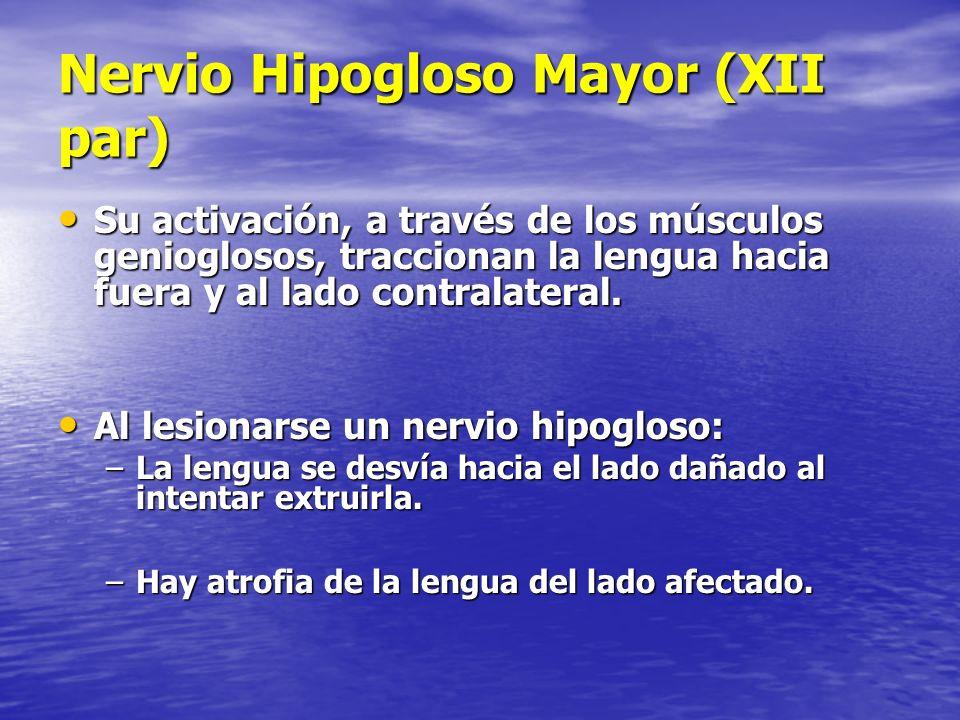 Nervio Hipogloso Mayor (XII par) Su activación, a través de los músculos genioglosos, traccionan la lengua hacia fuera y al lado contralateral. Su act