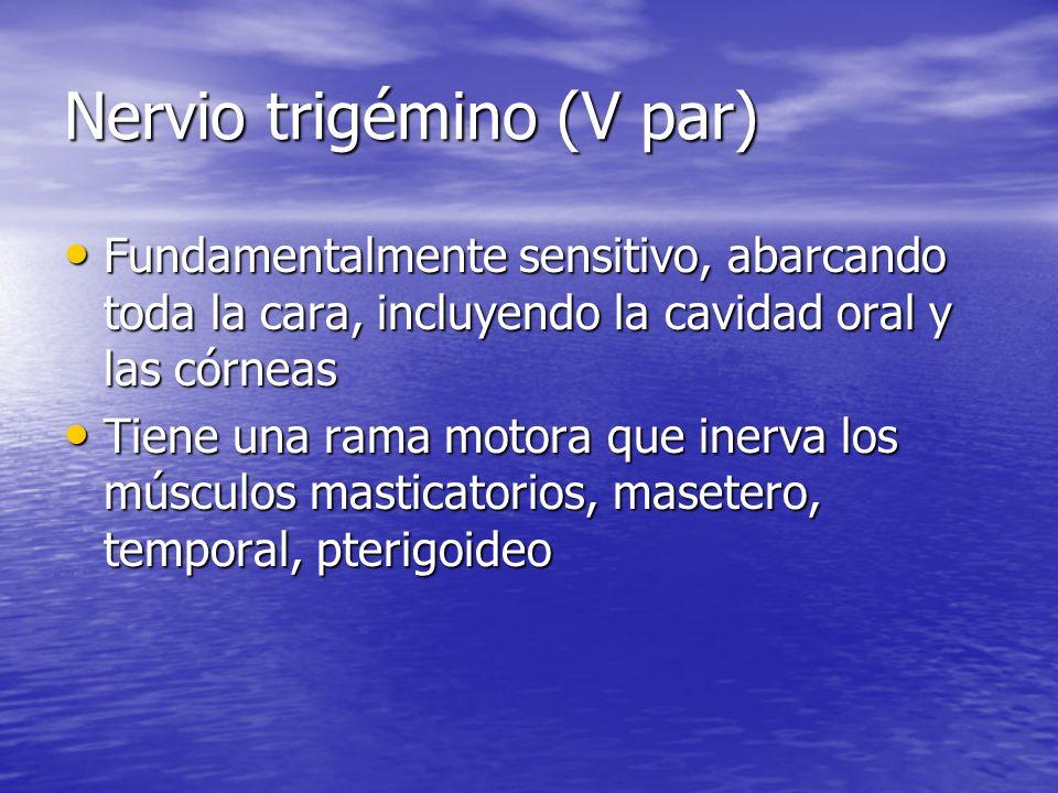 Nervio trigémino (V par) Fundamentalmente sensitivo, abarcando toda la cara, incluyendo la cavidad oral y las córneas Fundamentalmente sensitivo, abar