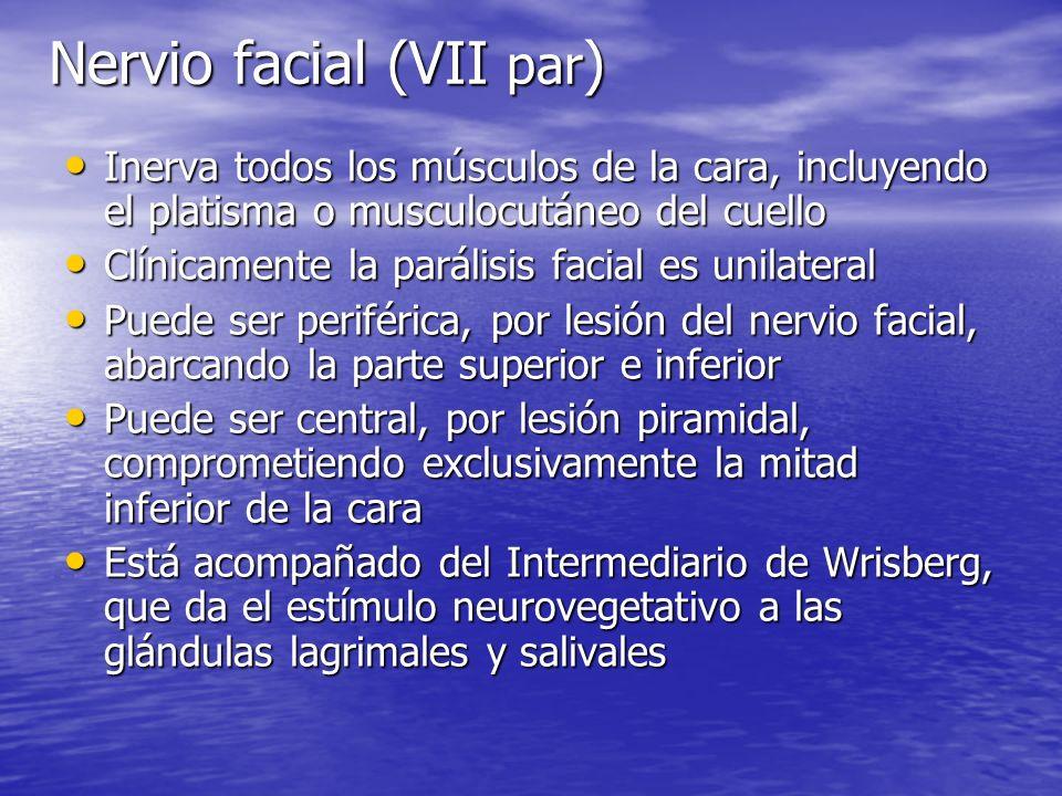 Nervio facial (VII par ) Inerva todos los músculos de la cara, incluyendo el platisma o musculocutáneo del cuello Inerva todos los músculos de la cara