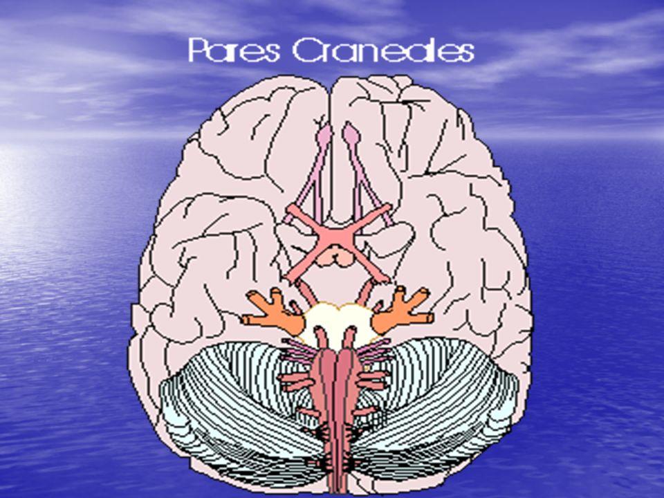 Sindrome de Horner Miosis Miosis Ptosis Ptosis RFM presente RFM presente Sudor frontal disminuido Sudor frontal disminuido Cuando es congénito, el iris no se pigmenta Cuando es congénito, el iris no se pigmenta