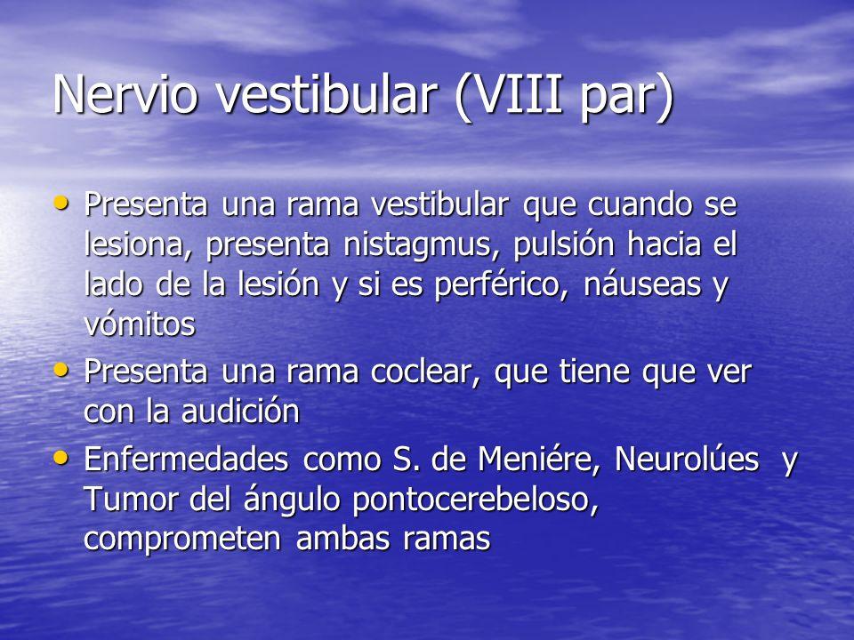 Nervio vestibular (VIII par) Presenta una rama vestibular que cuando se lesiona, presenta nistagmus, pulsión hacia el lado de la lesión y si es perfér