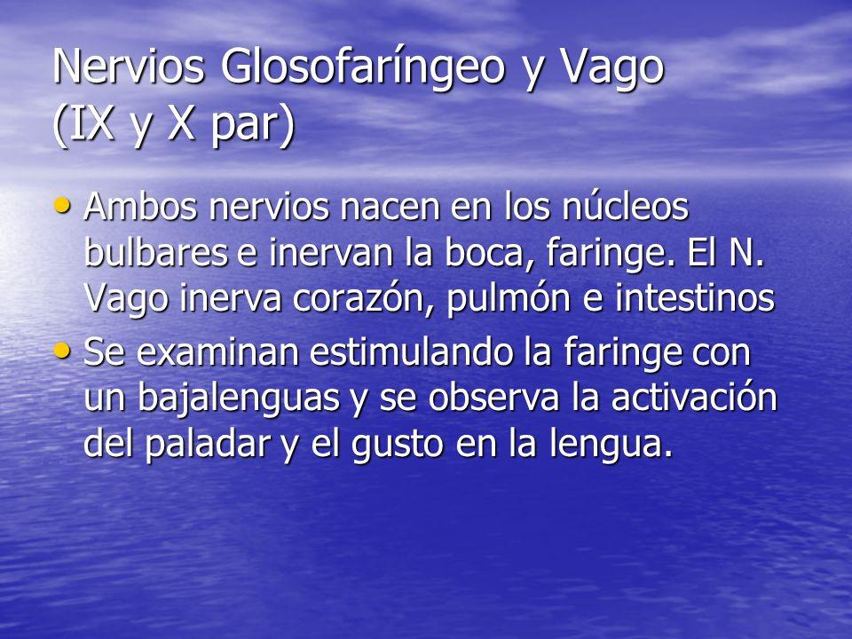 Nervios Glosofaríngeo y Vago (IX y X par) Ambos nervios nacen en los núcleos bulbares e inervan la boca, faringe. El N. Vago inerva corazón, pulmón e