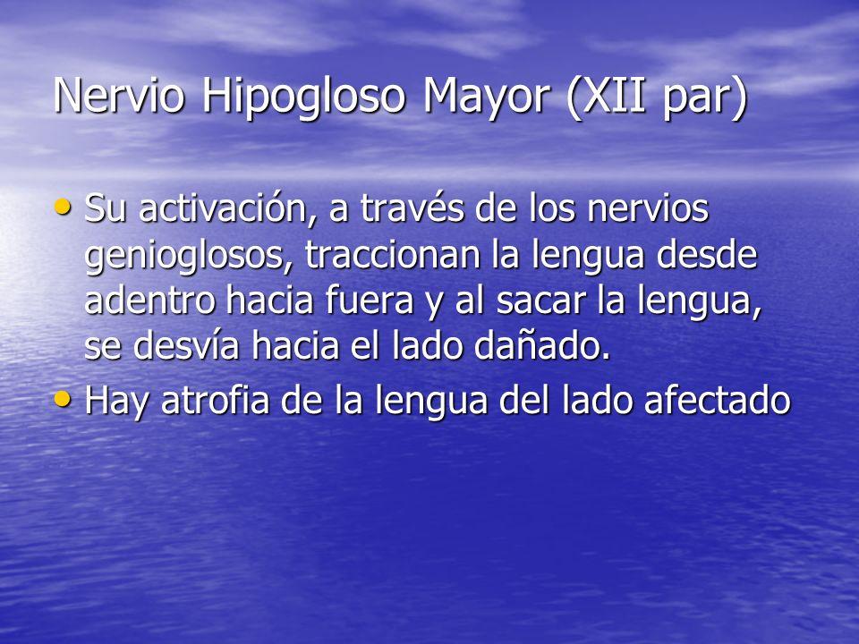 Nervio Hipogloso Mayor (XII par) Su activación, a través de los nervios genioglosos, traccionan la lengua desde adentro hacia fuera y al sacar la leng