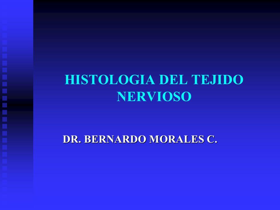 HISTOLOGIA DEL TEJIDO NERVIOSO DR. BERNARDO MORALES C.