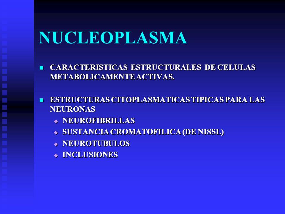 NUCLEOPLASMA CARACTERISTICAS ESTRUCTURALES DE CELULAS METABOLICAMENTE ACTIVAS. CARACTERISTICAS ESTRUCTURALES DE CELULAS METABOLICAMENTE ACTIVAS. ESTRU