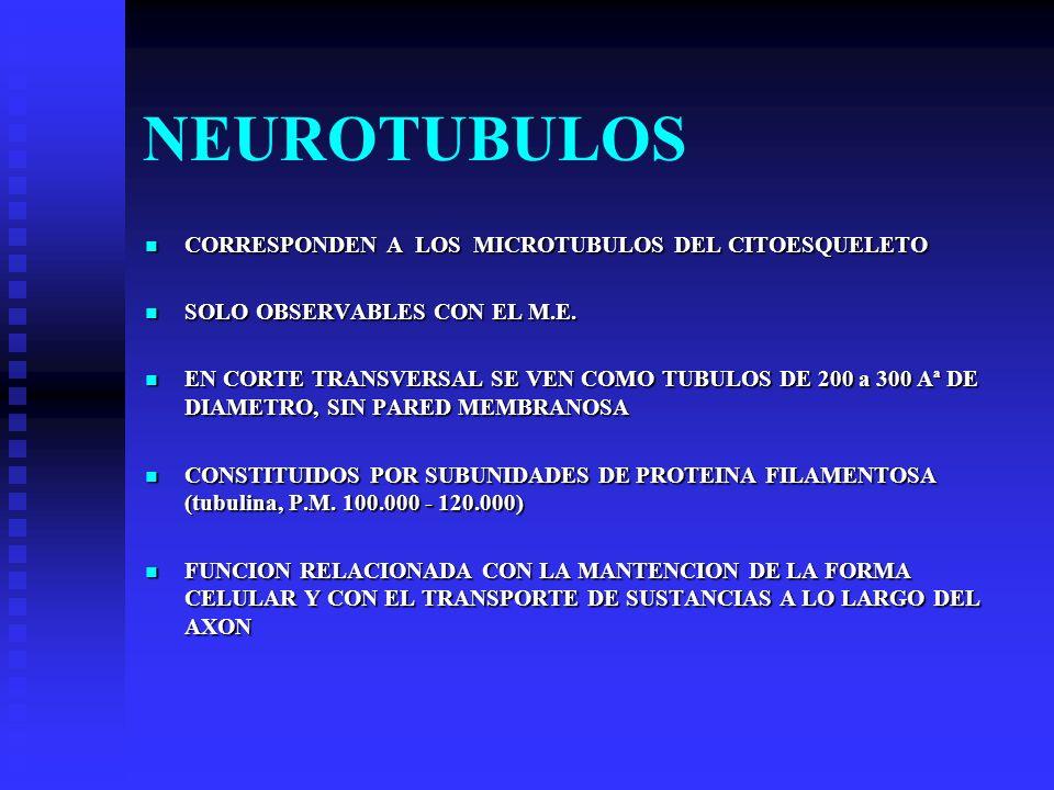 NEUROTUBULOS CORRESPONDEN A LOS MICROTUBULOS DEL CITOESQUELETO CORRESPONDEN A LOS MICROTUBULOS DEL CITOESQUELETO SOLO OBSERVABLES CON EL M.E. SOLO OBS