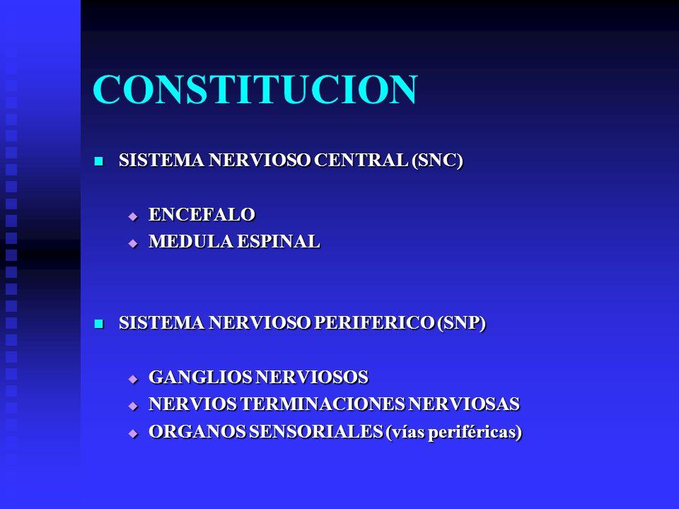 FUNCIONES SENSITIVAS SENSITIVAS RECEPTORES RECEPTORES INTEGRADORA INTEGRADORA CENTROS NERVIOSOS CENTROS NERVIOSOS MOTORA MOTORA EFECTORES (células musculares y glandulares) EFECTORES (células musculares y glandulares) SECRETORAS SECRETORAS HORMONAS HORMONAS BASE ESTRUCTURAL PARA LAS FUNCIONES SUPERIORES DEL PENSAMIENTO BASE ESTRUCTURAL PARA LAS FUNCIONES SUPERIORES DEL PENSAMIENTO