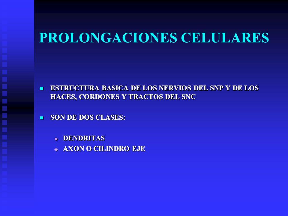 PROLONGACIONES CELULARES ESTRUCTURA BASICA DE LOS NERVIOS DEL SNP Y DE LOS HACES, CORDONES Y TRACTOS DEL SNC ESTRUCTURA BASICA DE LOS NERVIOS DEL SNP