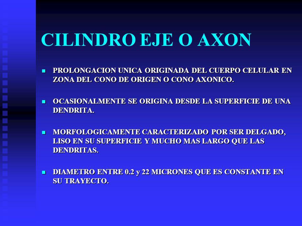 CILINDRO EJE O AXON PROLONGACION UNICA ORIGINADA DEL CUERPO CELULAR EN ZONA DEL CONO DE ORIGEN O CONO AXONICO. PROLONGACION UNICA ORIGINADA DEL CUERPO