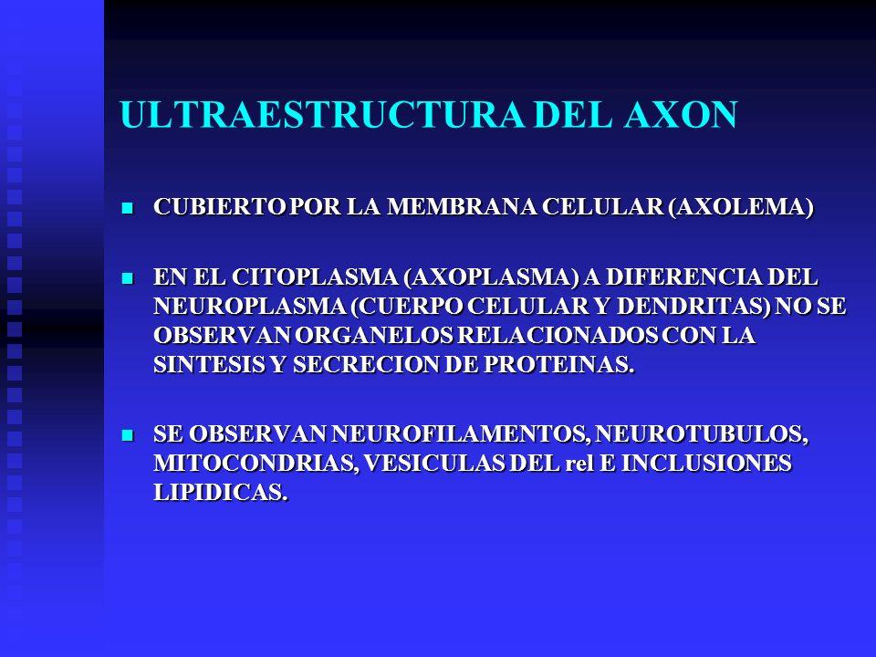 ULTRAESTRUCTURA DEL AXON CUBIERTO POR LA MEMBRANA CELULAR (AXOLEMA) CUBIERTO POR LA MEMBRANA CELULAR (AXOLEMA) EN EL CITOPLASMA (AXOPLASMA) A DIFERENC