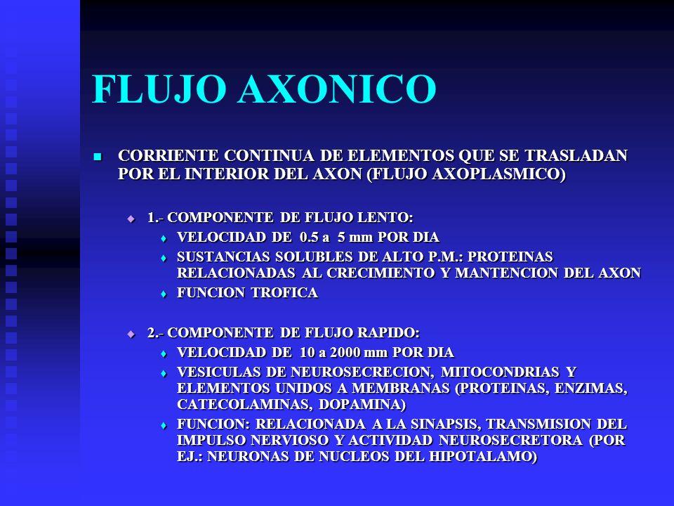 FLUJO AXONICO CORRIENTE CONTINUA DE ELEMENTOS QUE SE TRASLADAN POR EL INTERIOR DEL AXON (FLUJO AXOPLASMICO) CORRIENTE CONTINUA DE ELEMENTOS QUE SE TRA