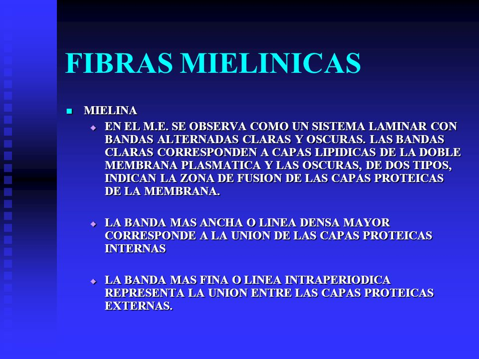 FIBRAS MIELINICAS MIELINA MIELINA EN EL M.E. SE OBSERVA COMO UN SISTEMA LAMINAR CON BANDAS ALTERNADAS CLARAS Y OSCURAS. LAS BANDAS CLARAS CORRESPONDEN