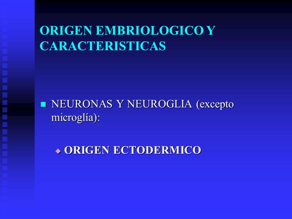 ORIGEN EMBRIOLOGICO Y CARACTERISTICAS NEURONAS Y NEUROGLIA (excepto microglía): NEURONAS Y NEUROGLIA (excepto microglía): ORIGEN ECTODERMICO ORIGEN EC